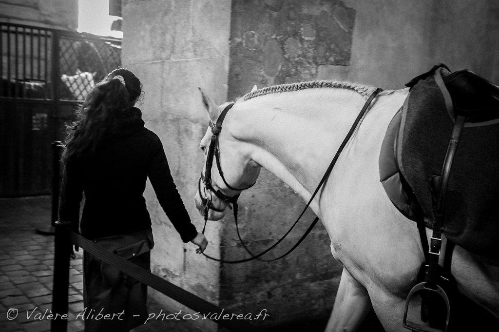 Ecuyère et son cheval
