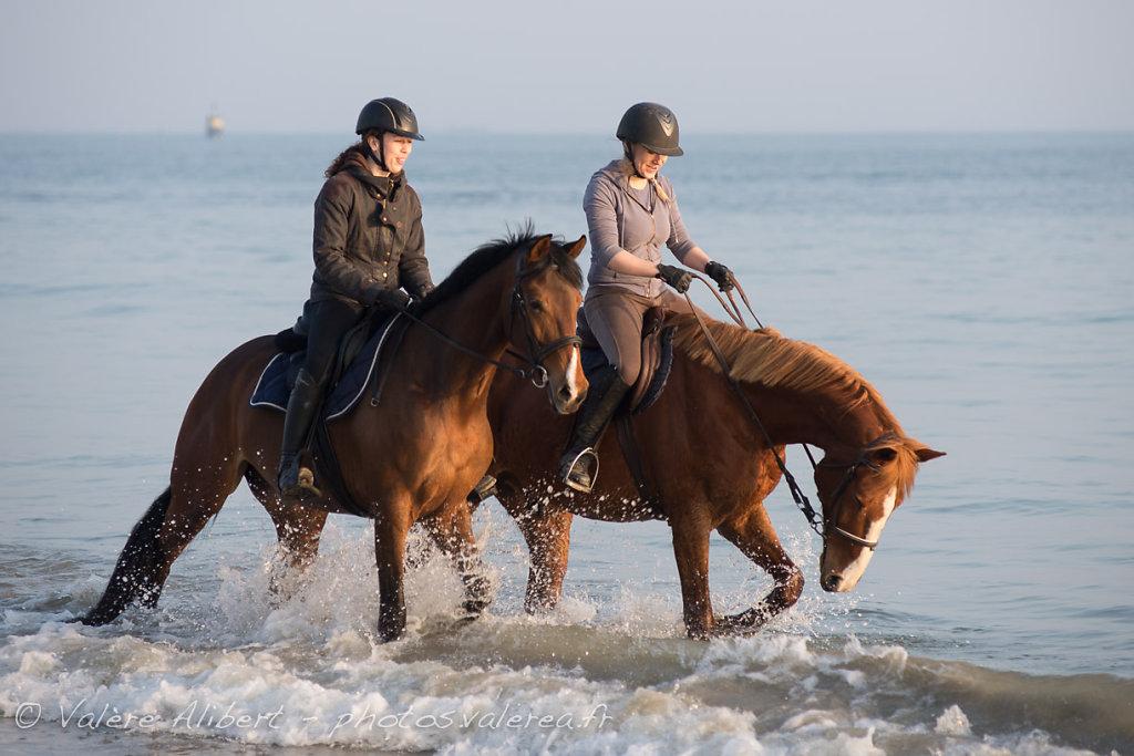Kerguelen Equitation