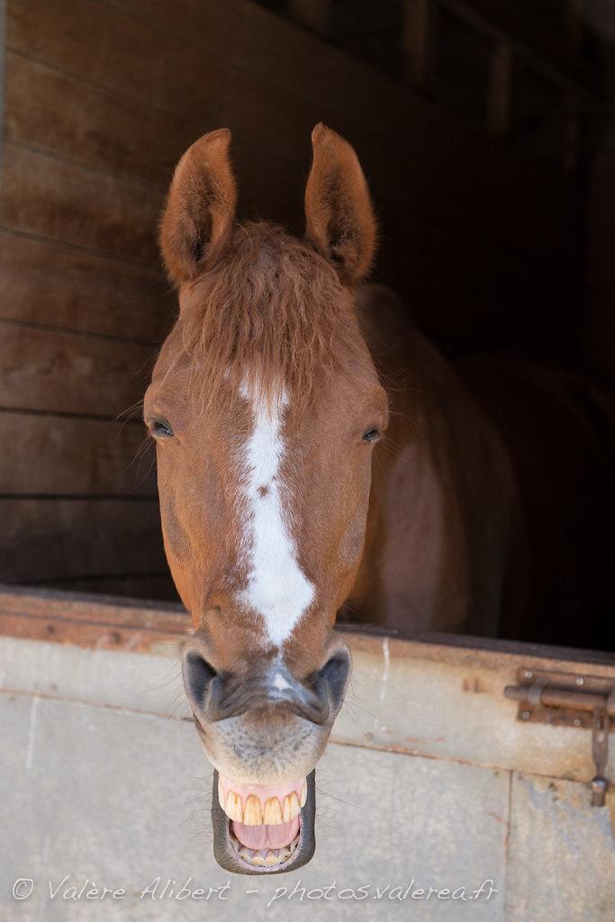 20130526-Kerguelen-Equitation-Chevaux-8913.jpg