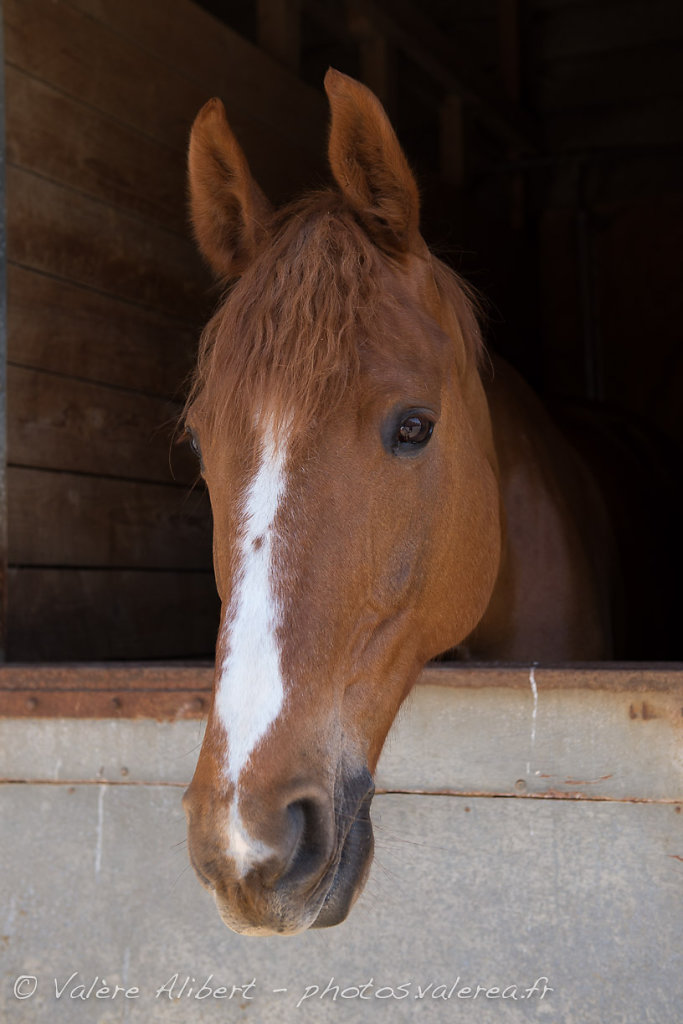 20130526-Kerguelen-Equitation-Chevaux-8915.jpg