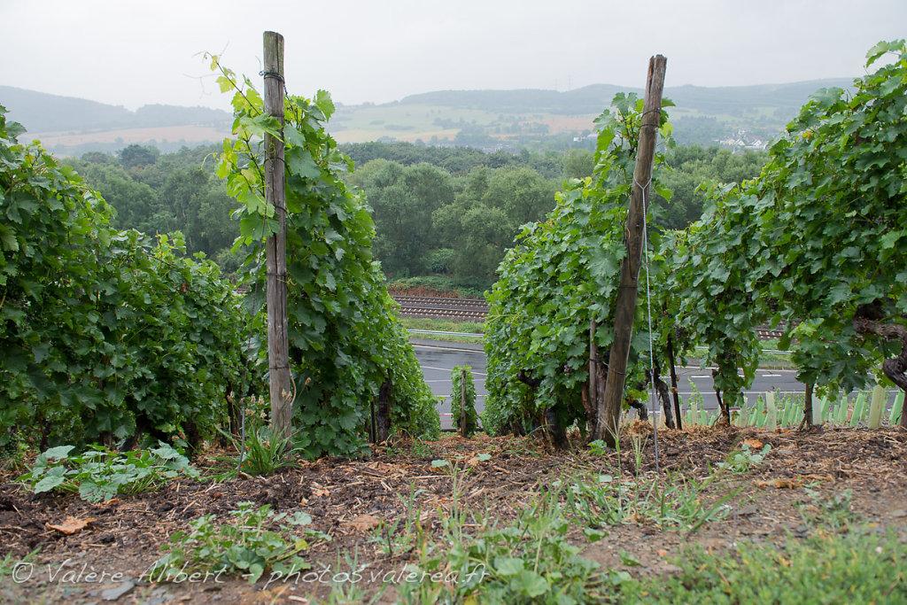 Région viticole